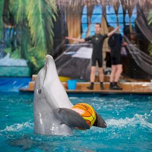 Дельфинарии, океанариумы Починок