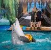Дельфинарии, океанариумы в Починках