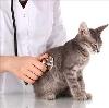 Ветеринарные клиники в Починках
